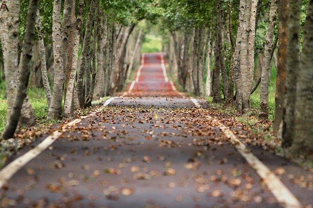 woodland-